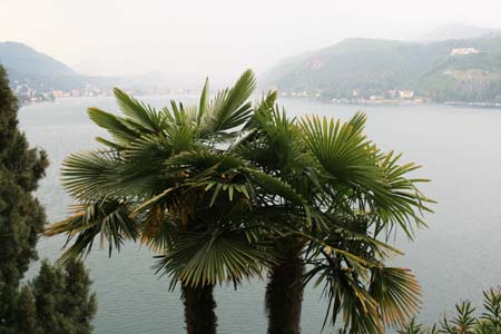 Palmen im Tessin